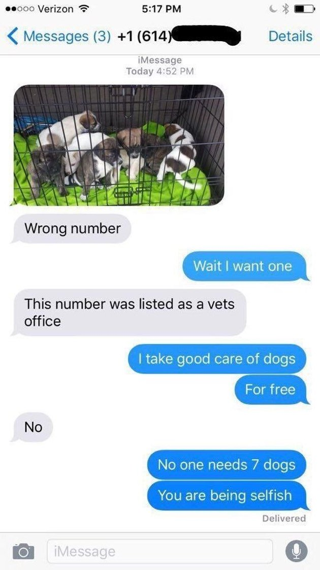 Picture of a litter of puppies texted to the wrong number