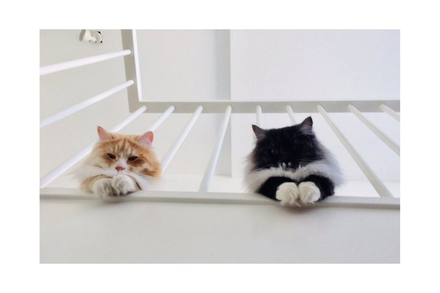 Two cats looking down from a staircase