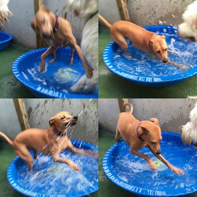 a collage of a dog in a tiny blue pool