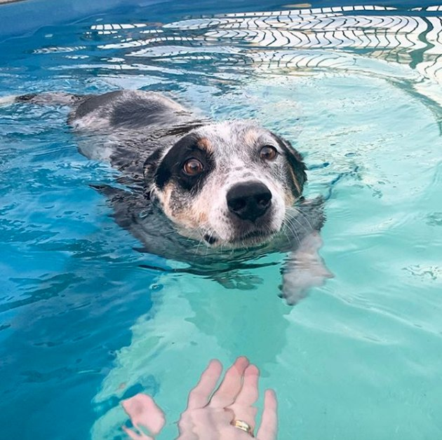 dog swimming toward human's hand