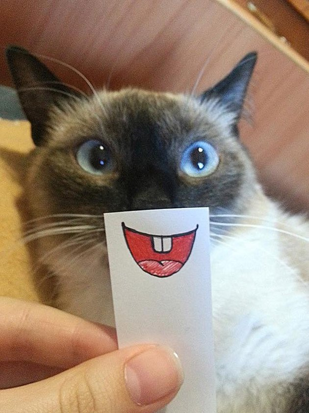 cat with cartoon mouth