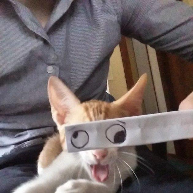 cat with cartoon eyes