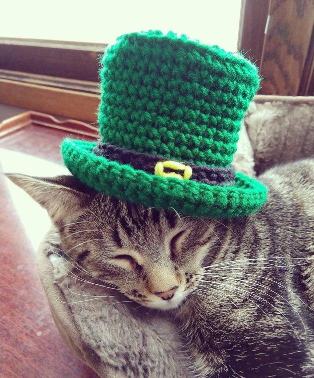 228 Irish Names For Your Cat