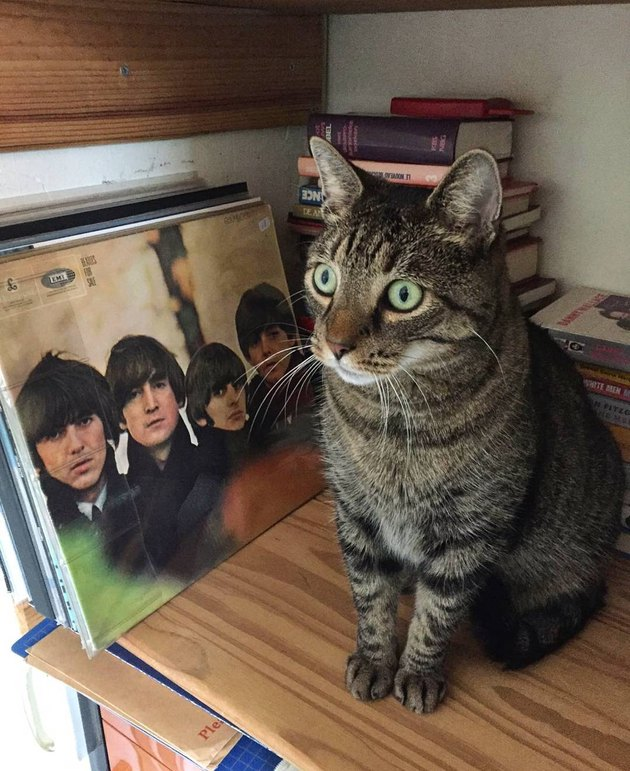 153 Beatles-Inspired Cat Names