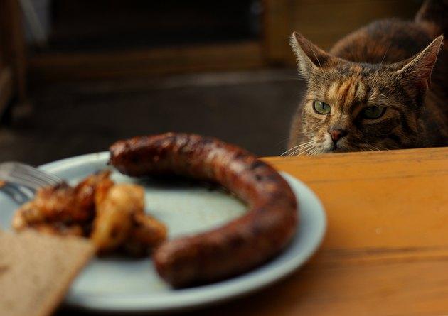 Cat looking at sausage