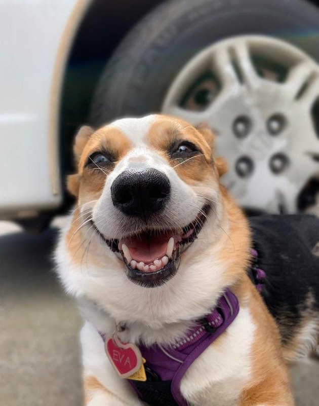 Happy dog.