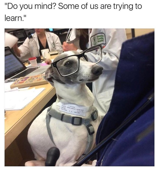 Dog wearing glasses in a classroom.