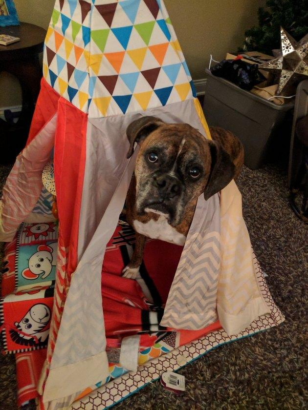 dog flips laundry basket over