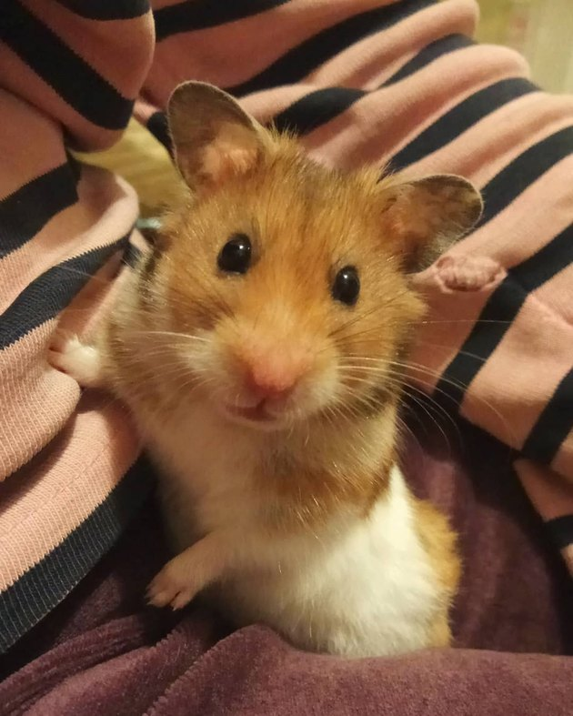 150 names for hamsters