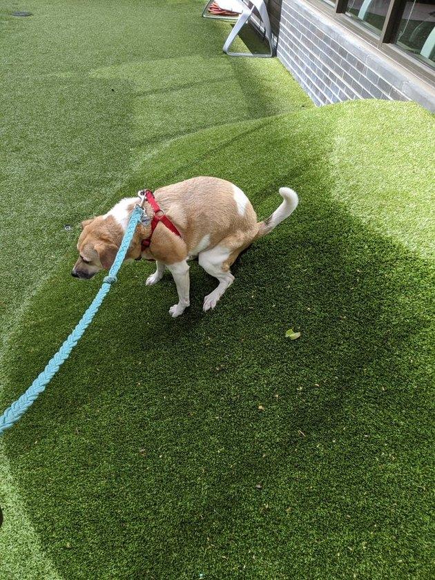 dog rolls down hill