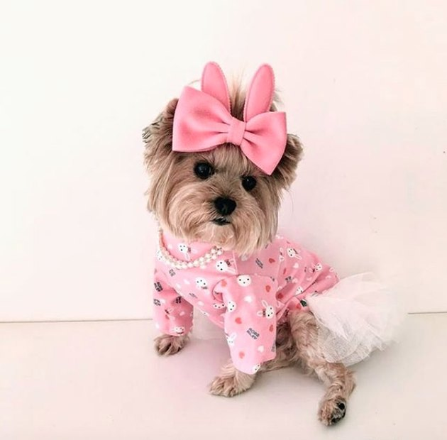 dog in pink sweater and white tutu