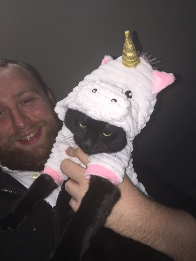Cat doesn't like his unicorn costume