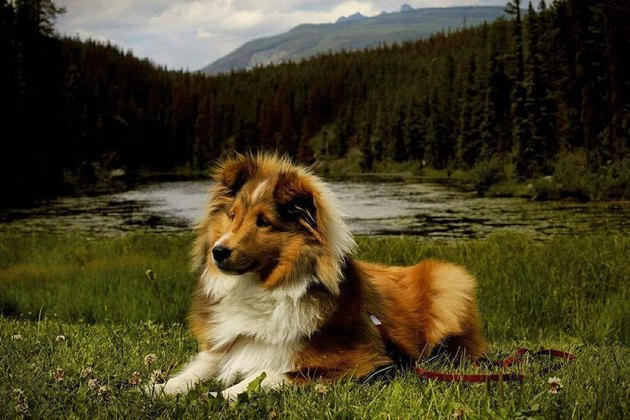 Dog in front of a lake surrounded by woods
