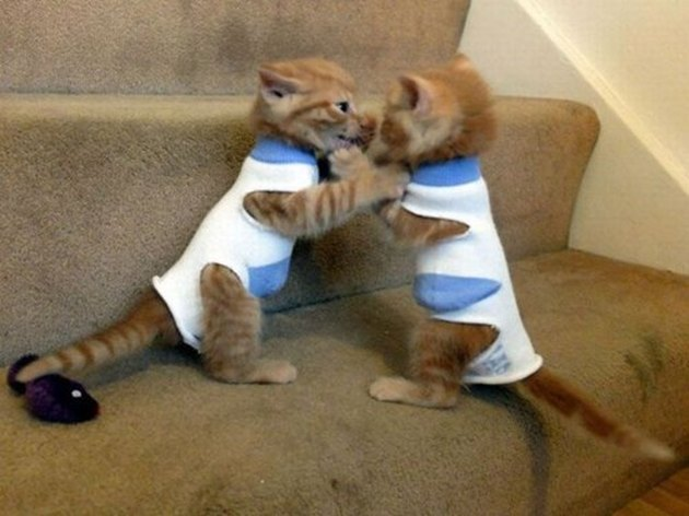 Two kittens in matching sweaters fighting on stairs.