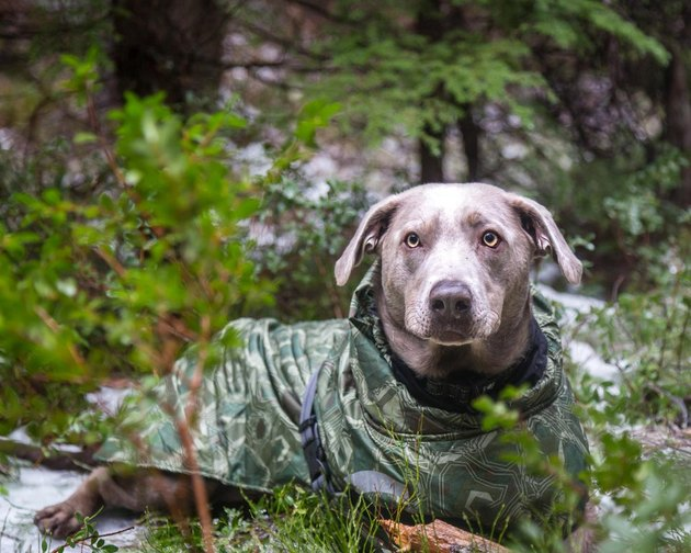 Dog in camouflage coat surrounded by trees
