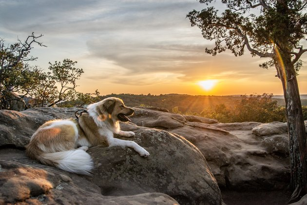 Dog on a mountaintop at sunset