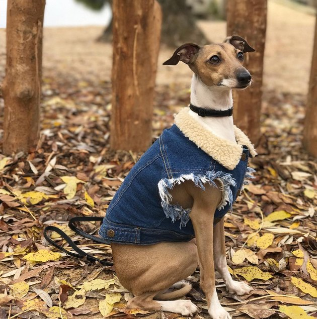 19 dogs with better denim game than you