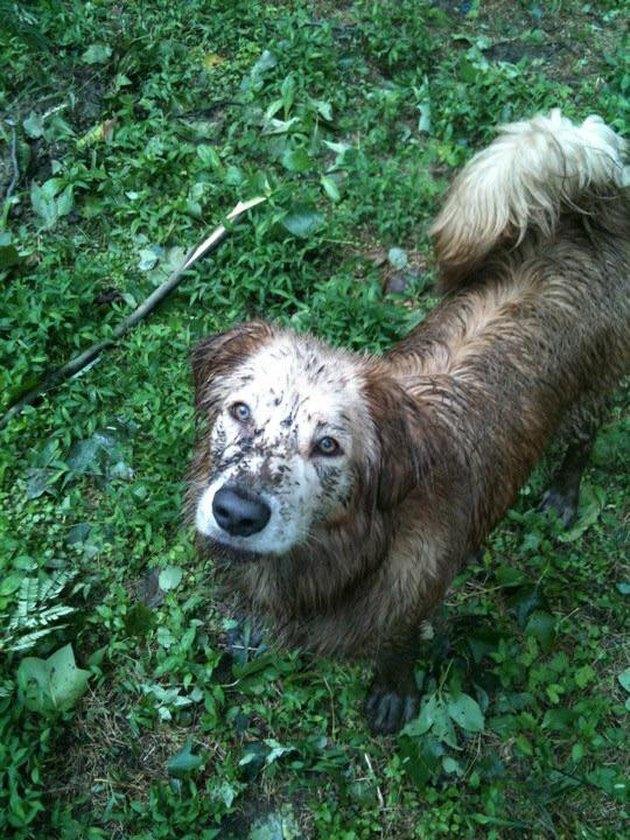 Muddy dog.
