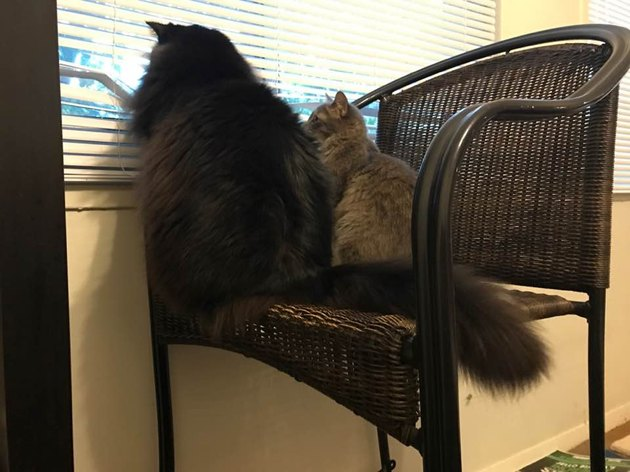 A cat and a kitten sitting side by side, staring out a window.