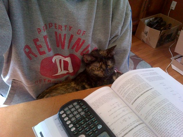 cat helps person study