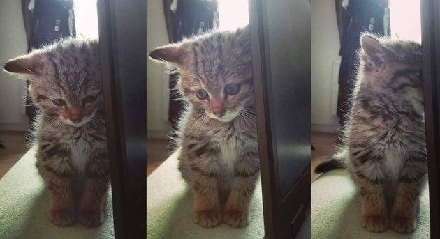 Kitten hiding its face behind table leg.
