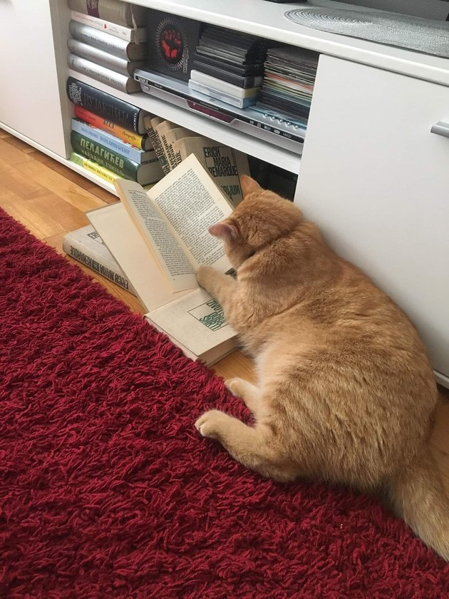 """cat """"reads"""" book"""
