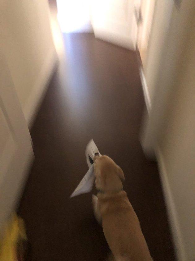 dog steals homework