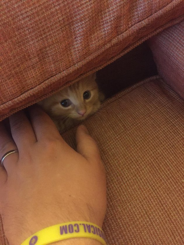 Kitten hiding behind couch cushions.