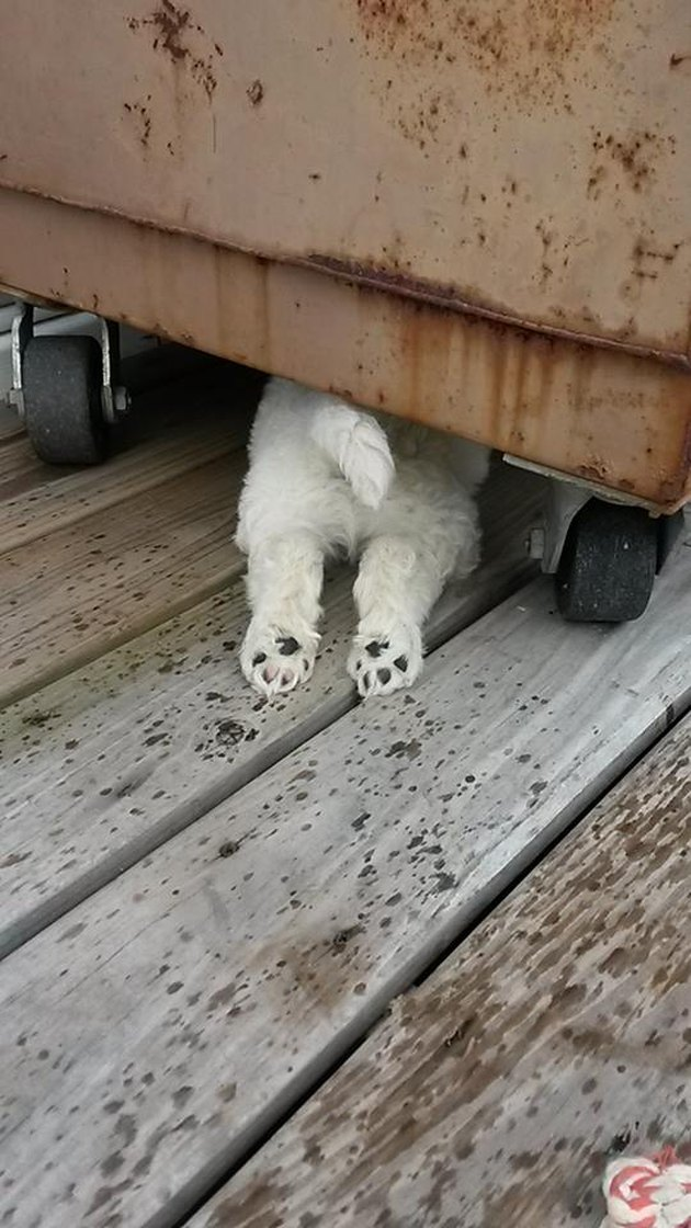 Puppy butt