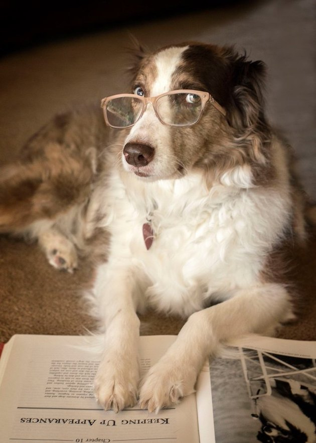 dog in glasses points to footnote
