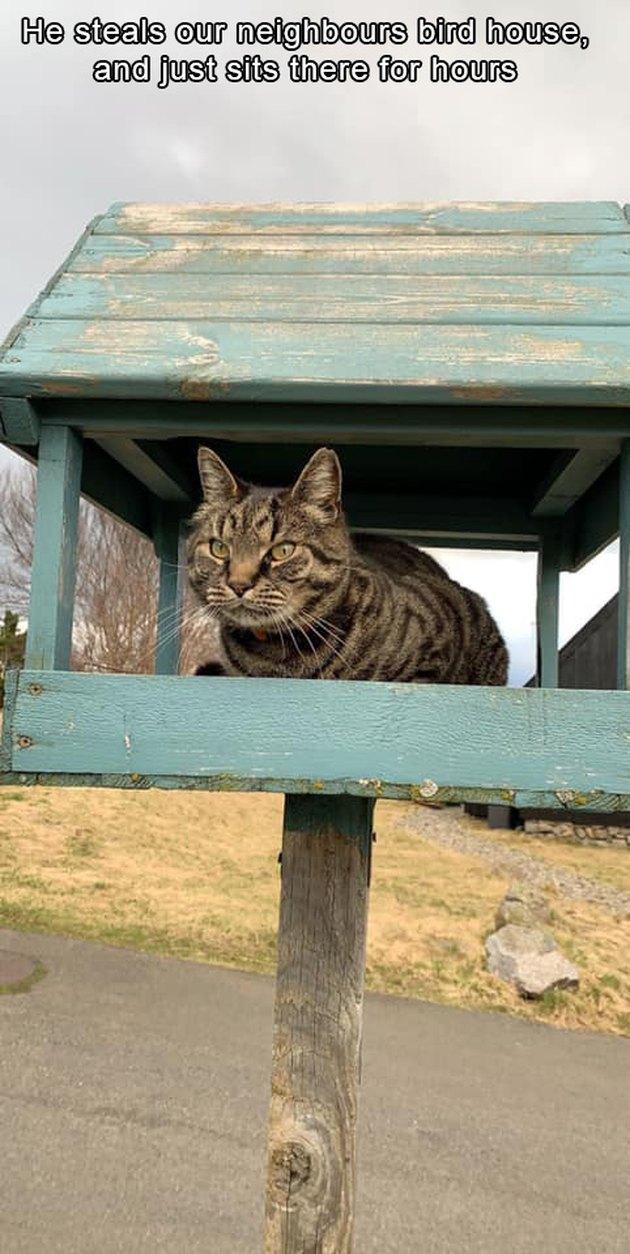 Cat sitting in birdhouse