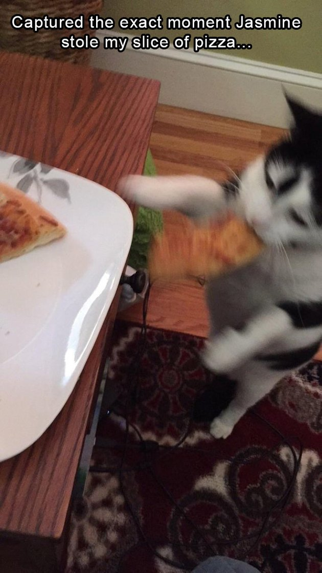 Cat stealing pizza