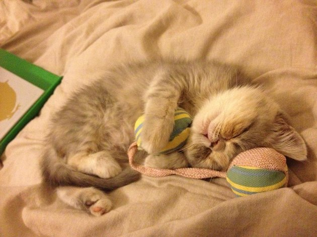 Sleeping kitten