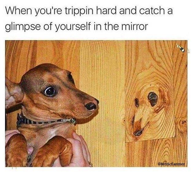 Dog looking at dog-shaped wood grain on floor.