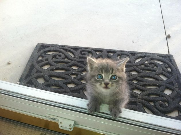 Kitten at a door