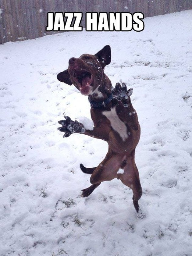 Dog leaping in the air with paws outstretched. Caption: Jazz hands