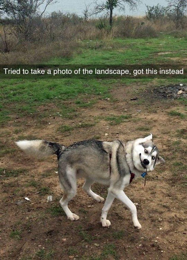 Awkward prancing dog.