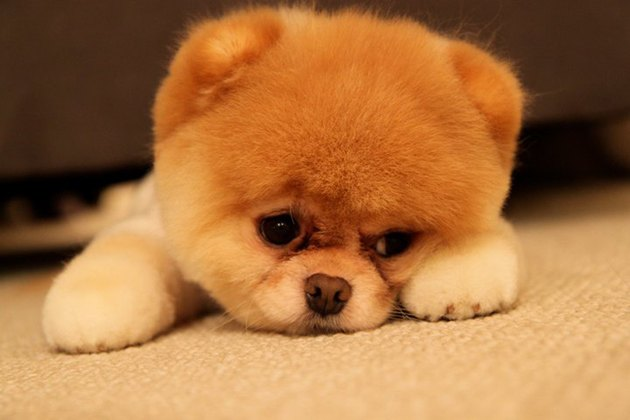 Sad looking puppy!