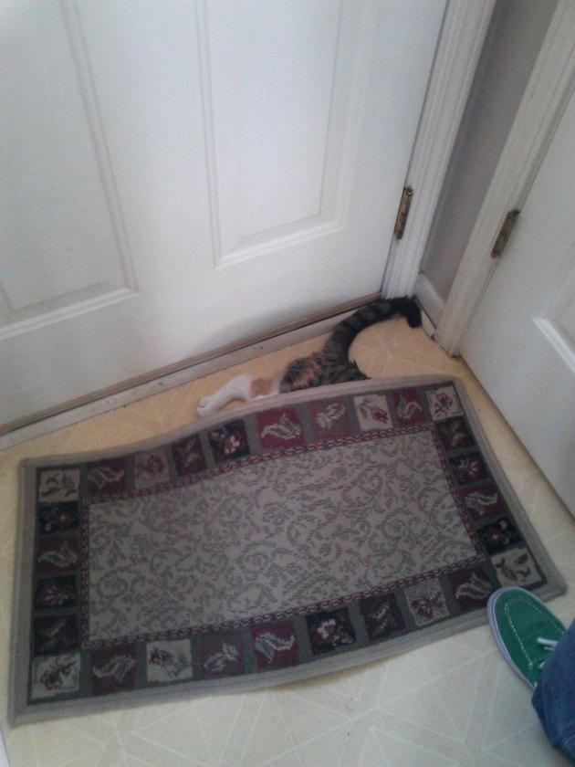 Cat hiding under rug