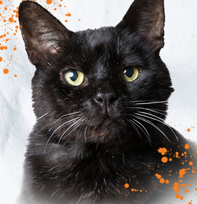 black cat on off-white background