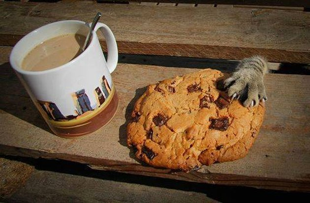Cat paw stealing a cookie