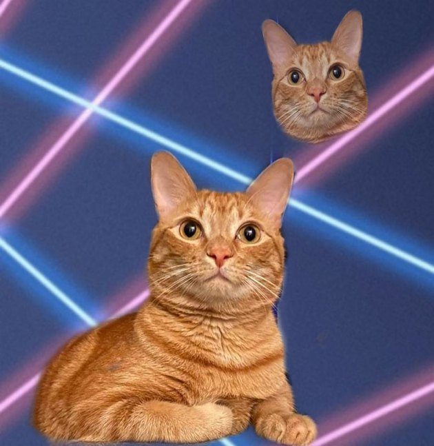 cat photoshopped into student portrait with 80s laser beams