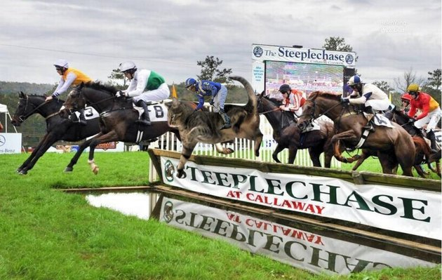cat photoshopped onto horse leaping over barrier
