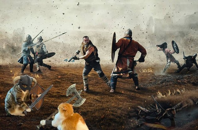 cats photoshopped into medieval battle