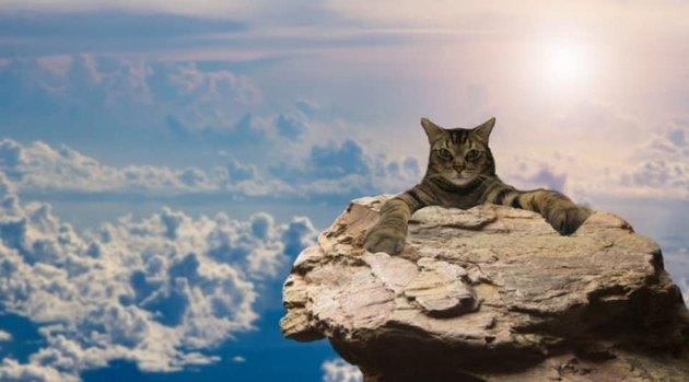 cat photoshopped onto tower of rocks