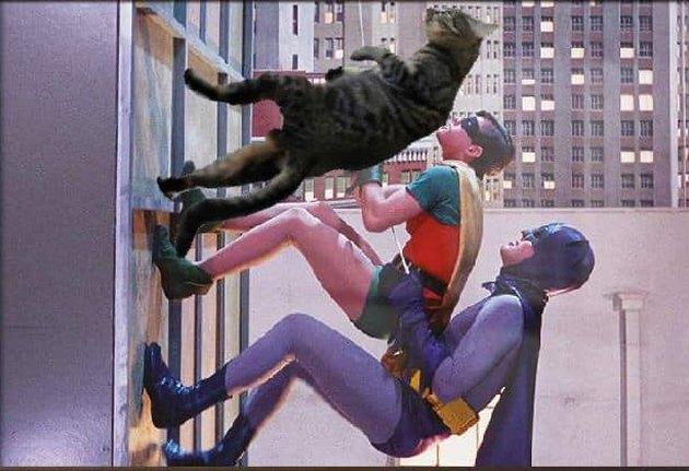 cat joins Batman & Robin for a building climb