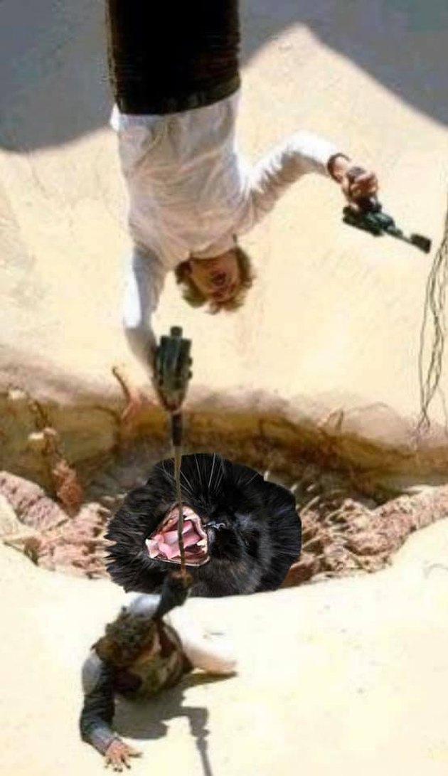 cat photoshopped into Empire Strikes Back