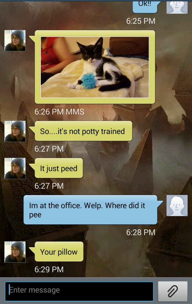 Funny text conversation about a kitten