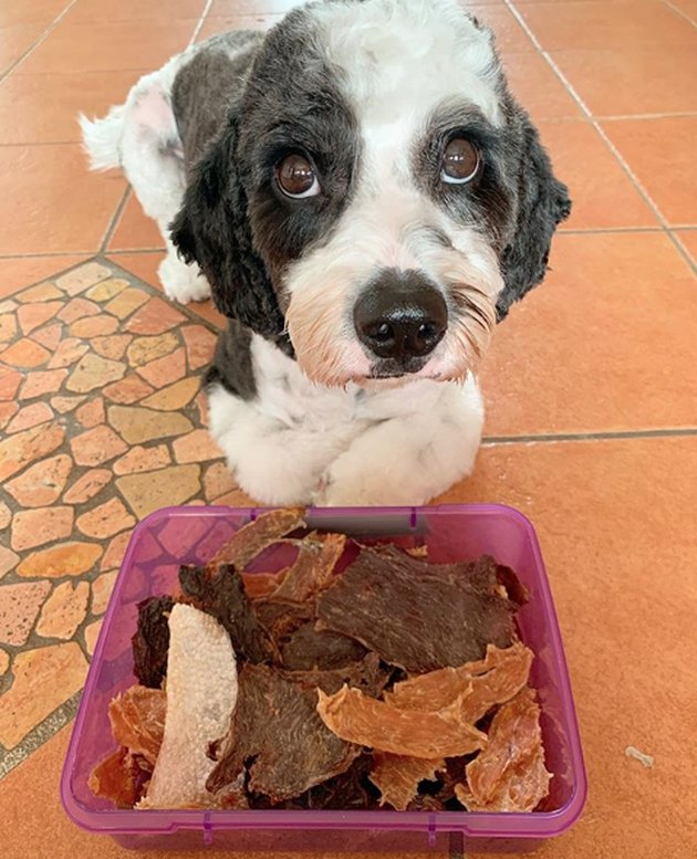 dog looking at dry snacks