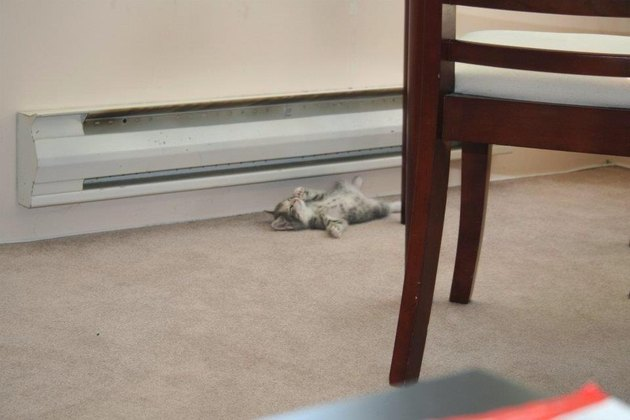 Kitten sleeping on heat vent